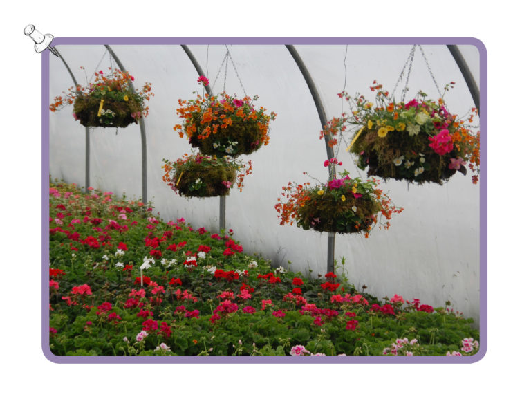 nursery-three-hanging-baskets